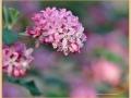 bloem_9018_il-tramonto