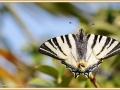 vlinder_9211_ad-smets