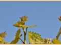 wijnrank_9583_il-tramonto