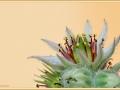 vetplant-in-bloei_6061_ad-smets