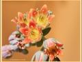 vetplant-in-bloei_8713