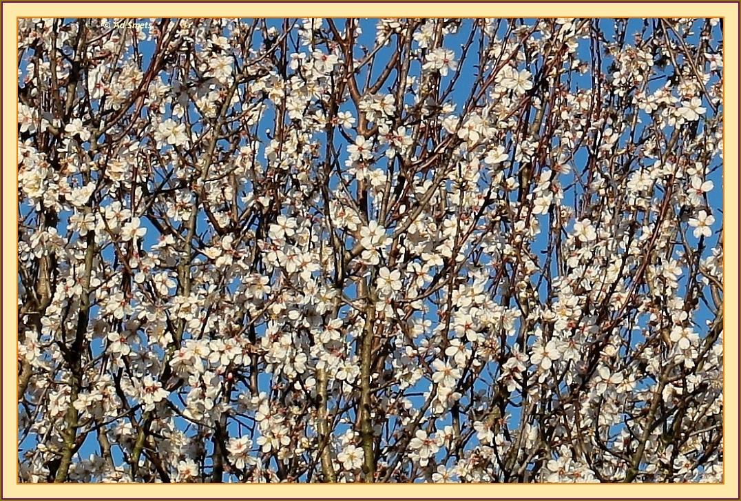 primavera_ad-smets_3870