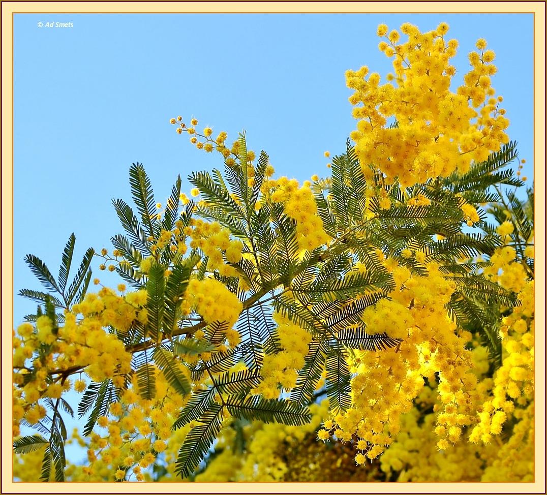 primavera_ad-smets_3875