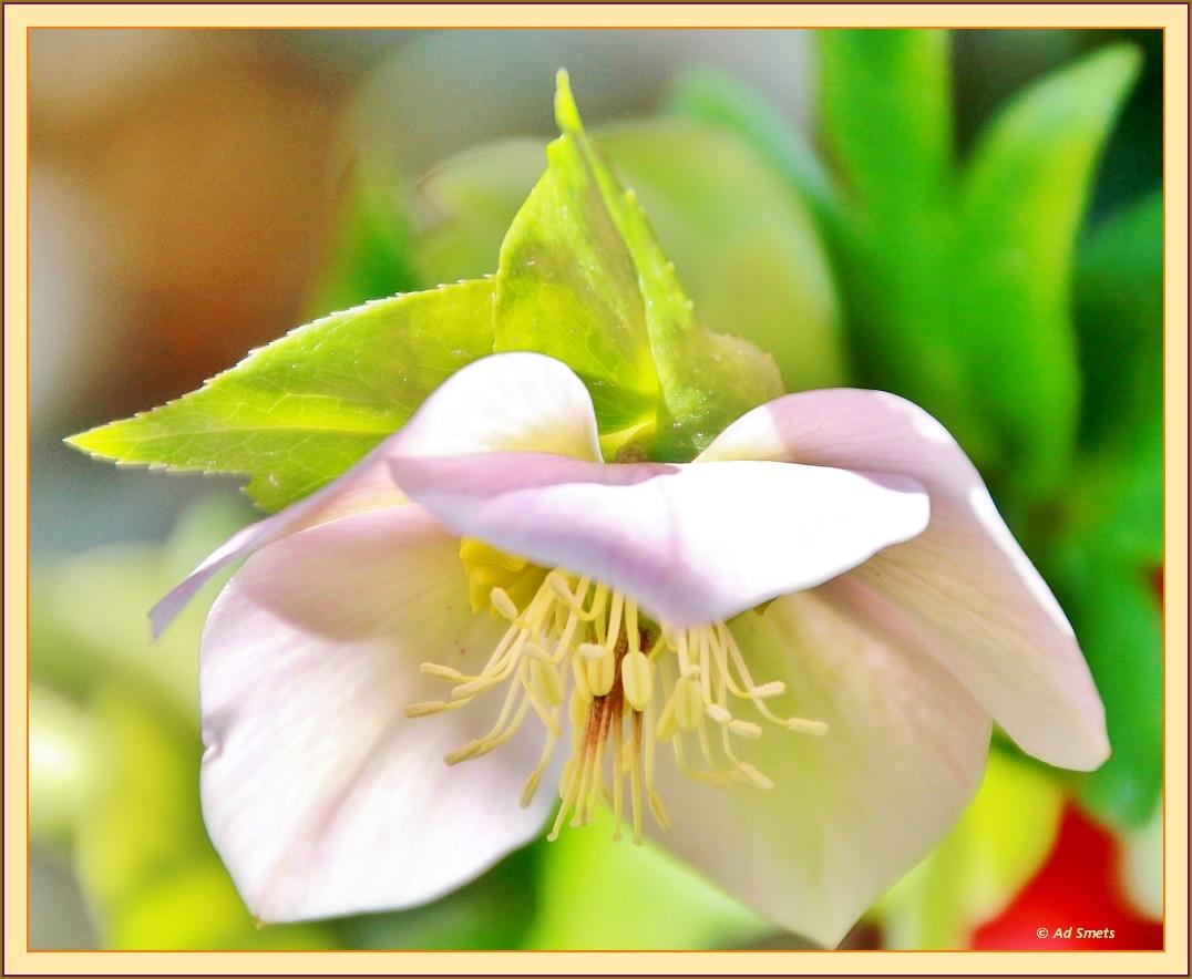 primavera_ad-smets_4725