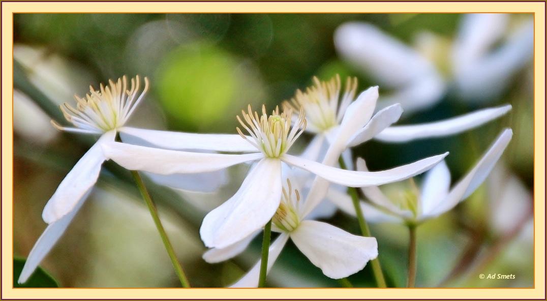 primavera_ad-smets_4732