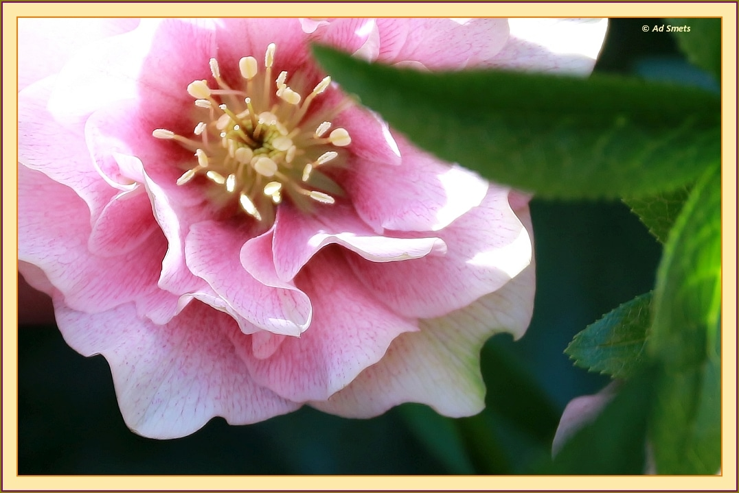 primavera_ad-smets_4739