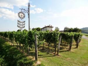 Strada del vino FVG